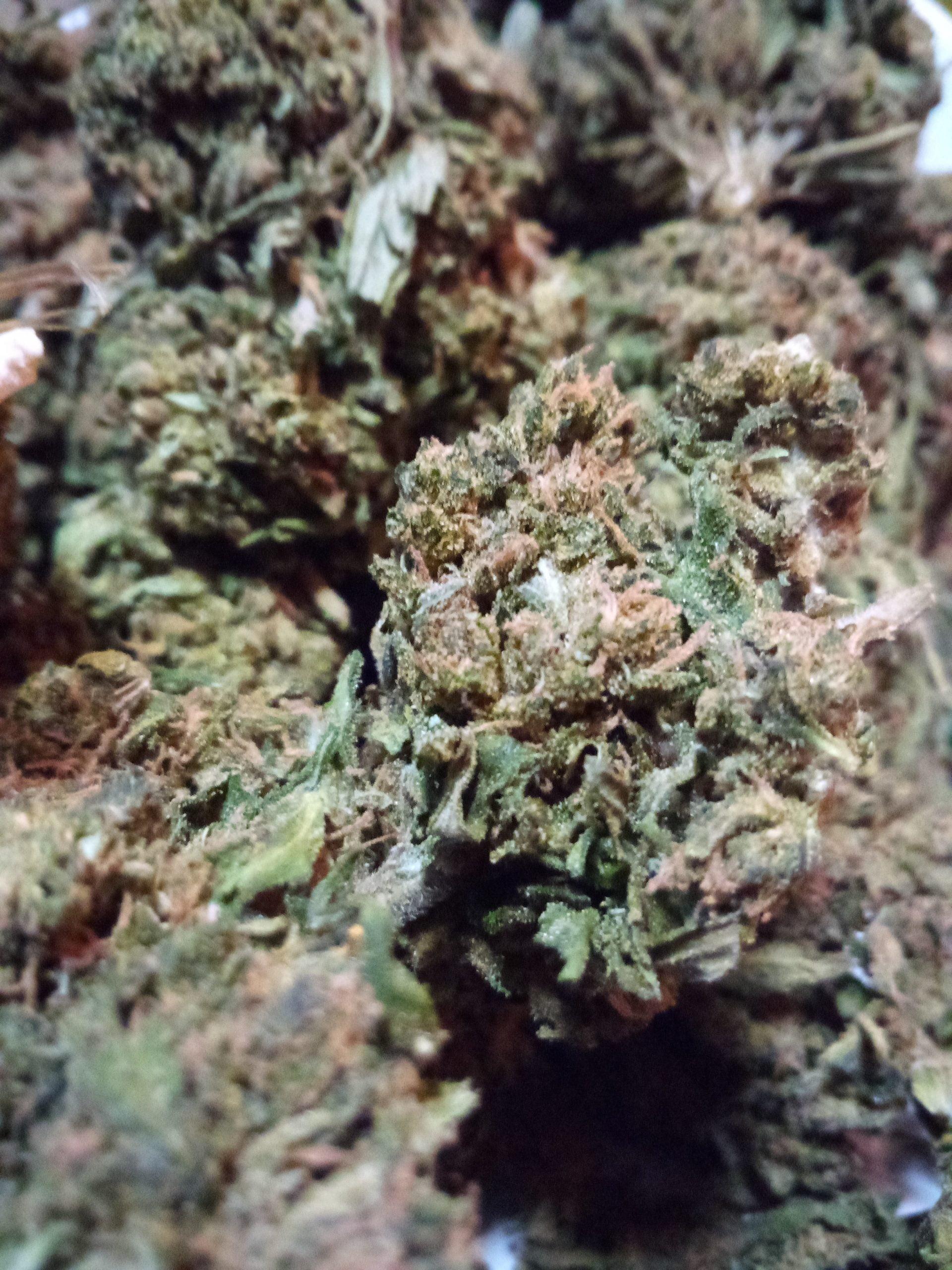 Kudetah Master Remedy CBD Flower 17%